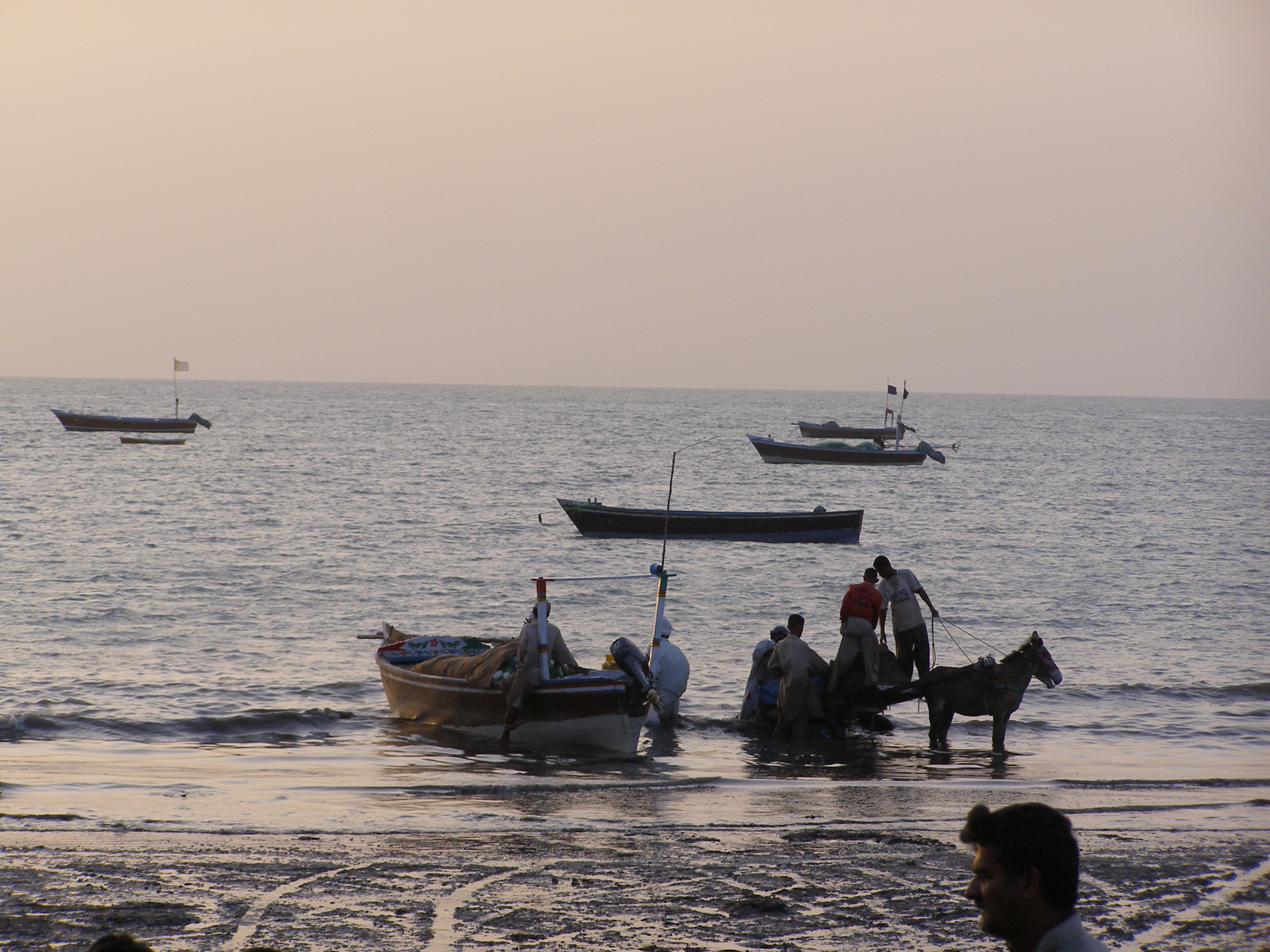 Fishermen coming ashore to unload their catch on donkey carts Photo Courtesy: Shahzad Ahmad)
